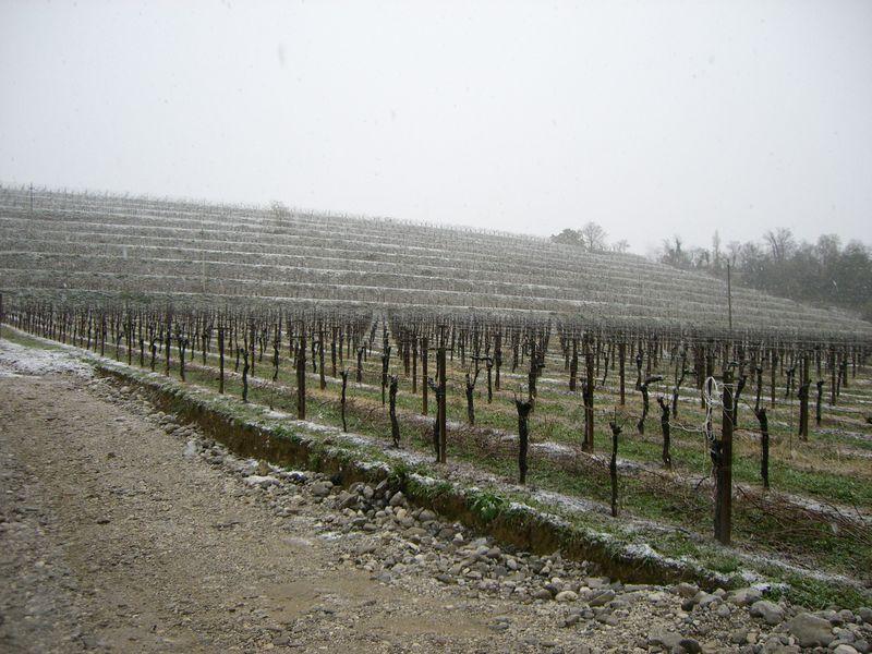 Snowy1